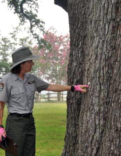 tree-identity