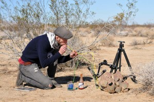 A huge success for Crystal Fracking at Joshua Tree